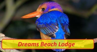 dreams beach logo